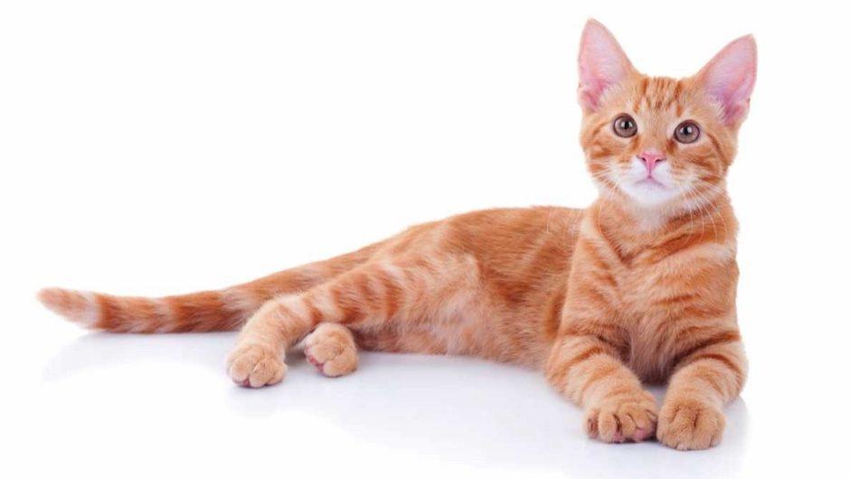 Redhead called cat