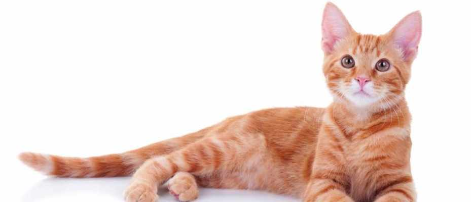 Is it true that most ginger cats are male? © iStock