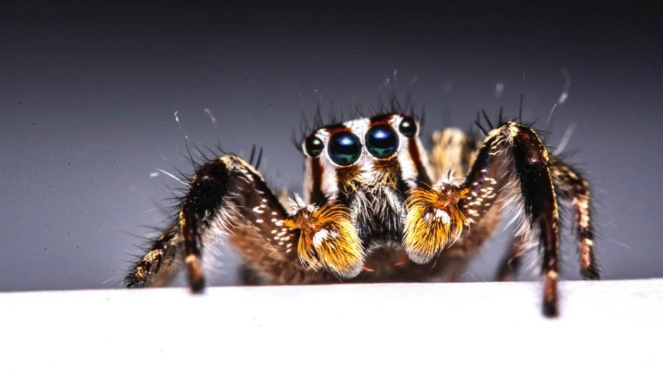 Is arachnophobia learned or an inbuilt instinct? © iStock