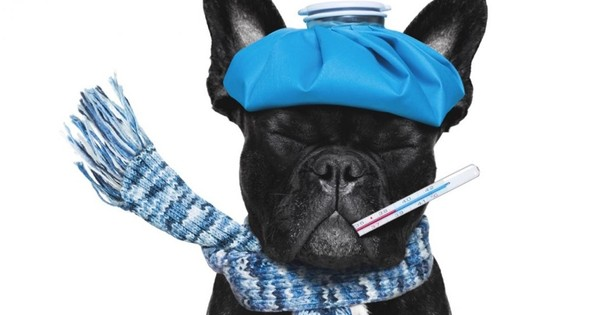 Could my pet catch my cold?