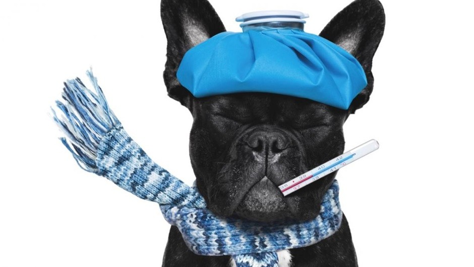 Could my pet catch my cold? © iStock