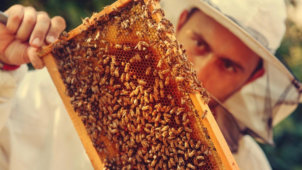 Could human singing make bees produce more honey? © iStock