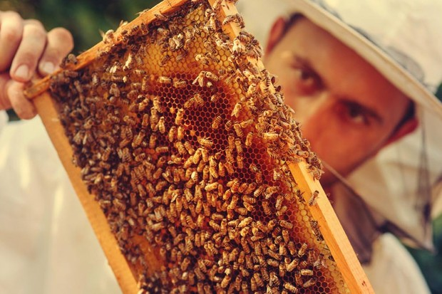 Could human singing make bees produce more honey? © iStock