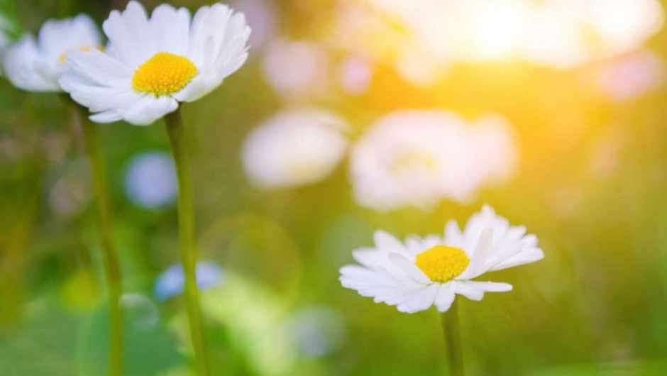 Can a plant die of cancer? © iStock