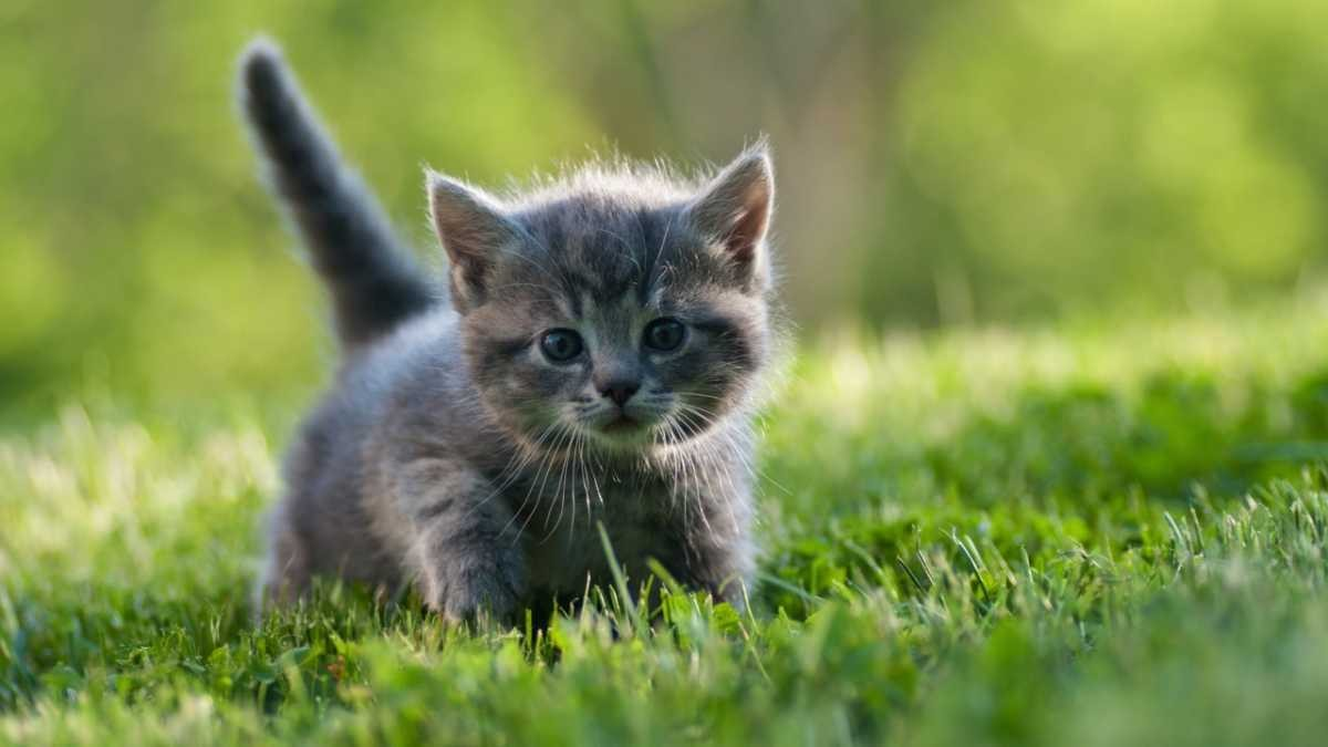 Six reasons your cat is wilder than you think © iStock
