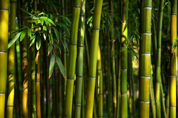 Are some plants better than others at sucking up carbon dioxide? © iStock