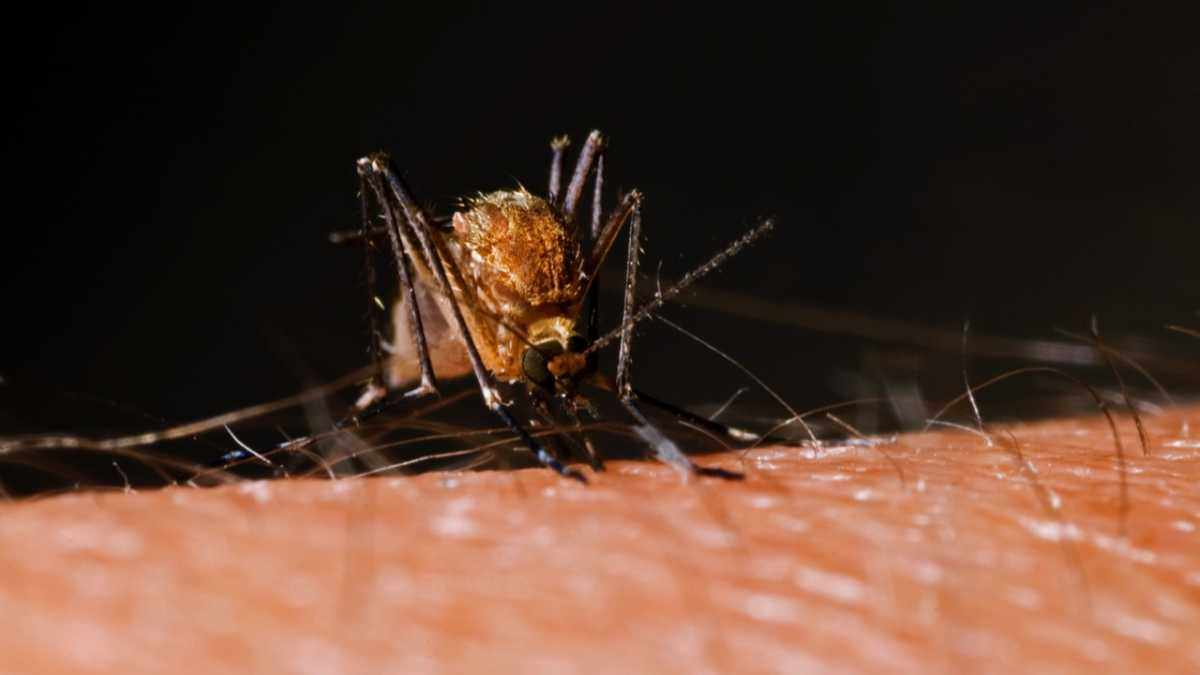 Why do mosquito bites itch so much? © iStock