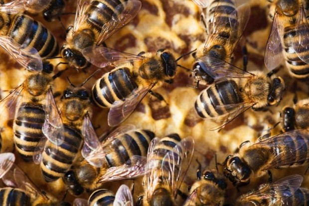 If bees became extinct, what effect would this have on mankind? © iStock