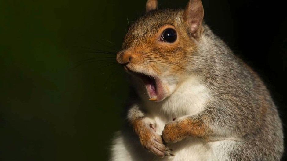 Do animals get hiccups? © iStock