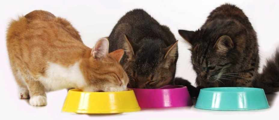 Can cats or dogs live on a vegetarian diet? © iStock