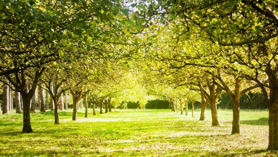 How many trees does it take to produce oxygen for one person? © iStock