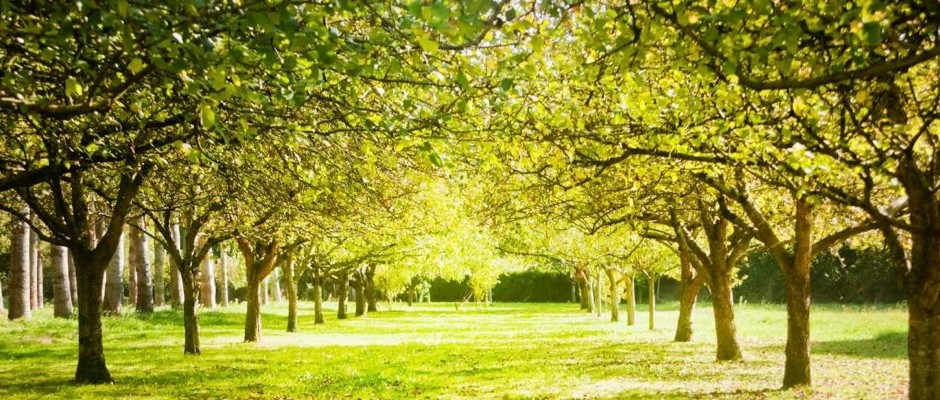 How Many Trees Does It Take To Produce Oxygen For One Person