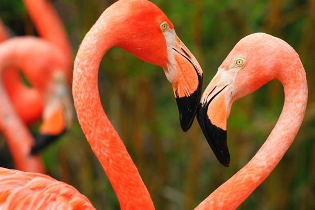 Bizarre animal mating rituals © iStock
