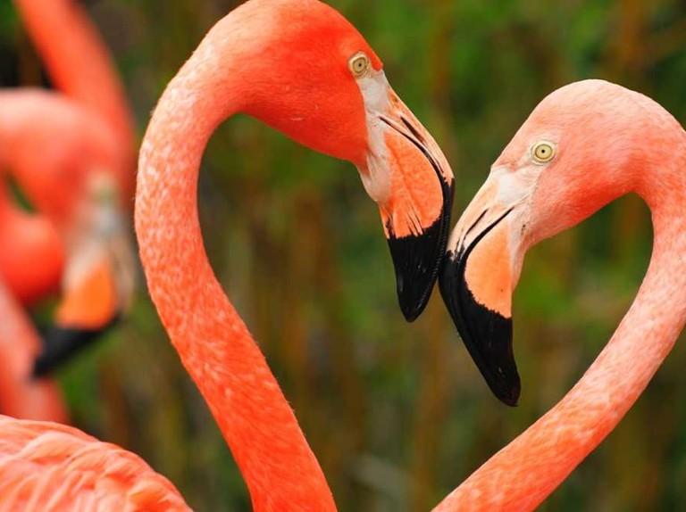 Animals' mating rituals: 5 weird ways animal hook up