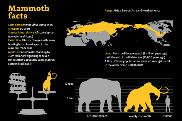 Mammoth Facts