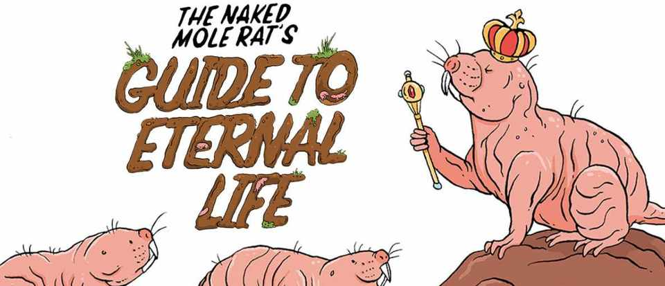The naked mole rat's guide to eternal life © Lindsey Leigh