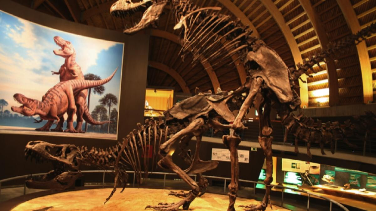 How did dinosaurs mate? © Mario Modesto
