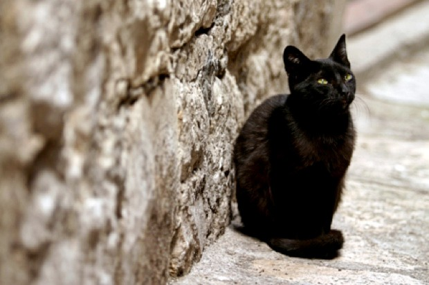 Not all 'domestic' cats are fully domesticated