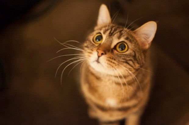 It's not hard to figure out what your cat is thinking: more cat food probably