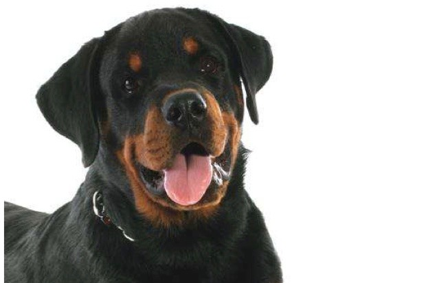 Top 10: What are the most intelligent dog breeds?