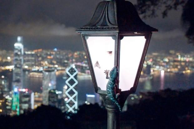 Opportunist geckos © BBC