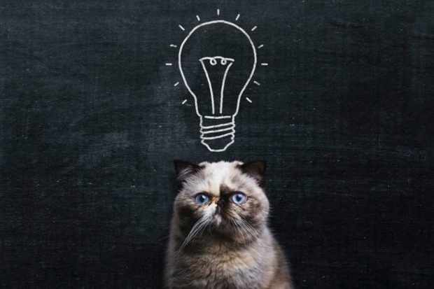 Are big brains smarter? © iStock