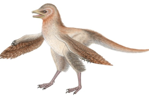 Eosinopteryx © Royal Belgian Institute of Natural Sciences