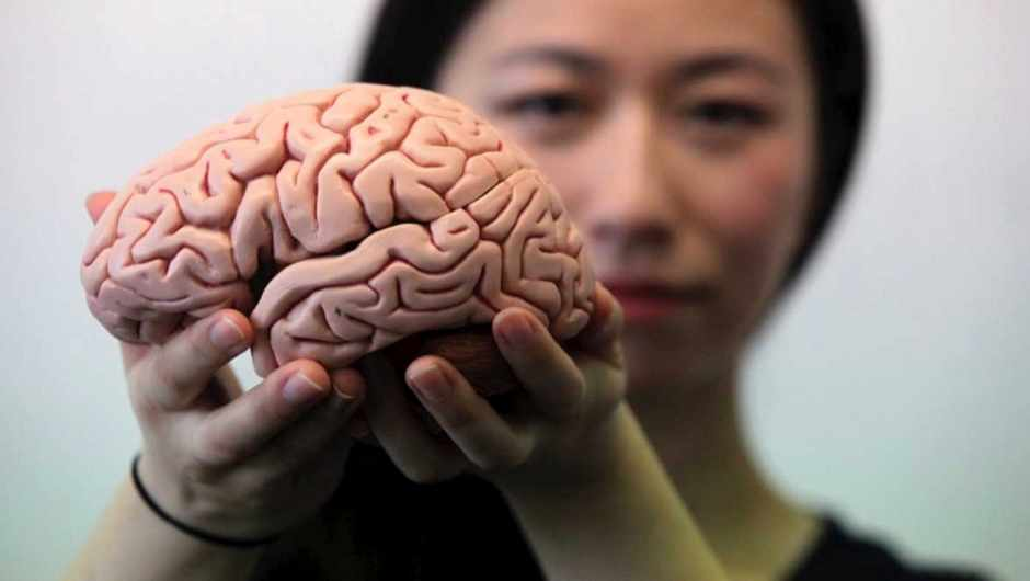 New research from Newcastle University, UK, in collaboration with the Federal University of Rio de Janeiro, investigated the way the human brain folds © Newcastle University