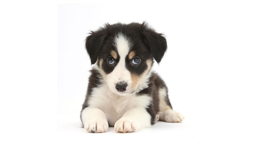 Why do we find puppies so cute? © Getty Images