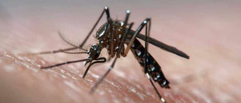 Could mosquitoes deliver malaria vaccines? © Getty Images
