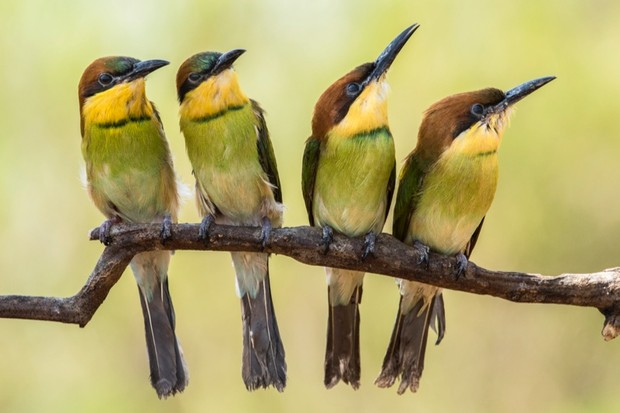 How did birds evolve? © Getty Images