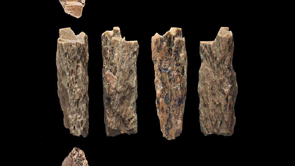 The bone fragments unearthed in Siberia in 2012 © T Higham/University of Oxford