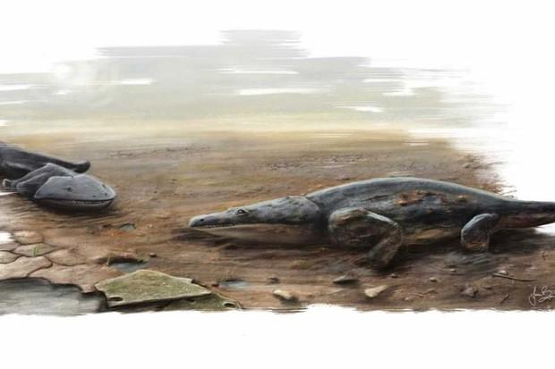 Prehistoric amphibian terrorised early dinosaurs © Joana Bruno