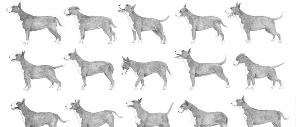 Multi-dog-rust-frame