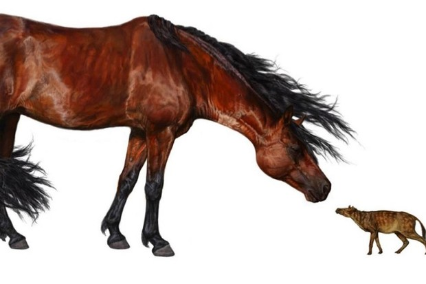 An artist's rendering of the early horse ancestor (right) alongside a modern-day horse (© Danielle Byerly, University of Florida)