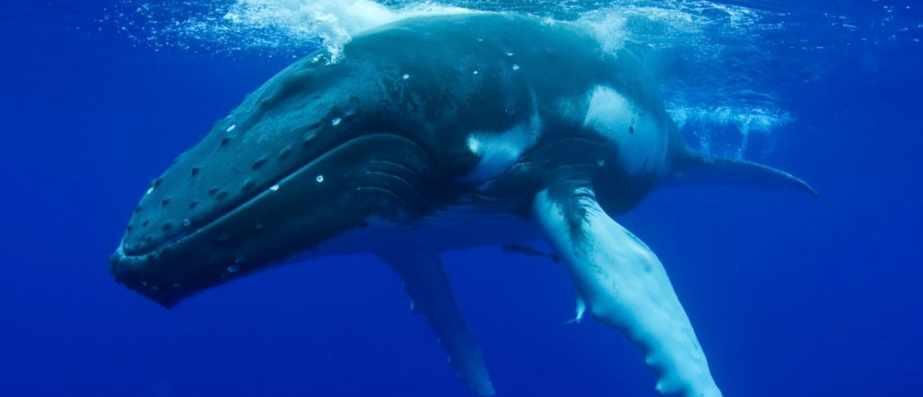 Do whales sleep? © iStock