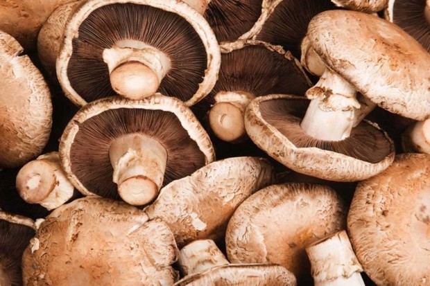 Scientists develop new battery – from a mushroom! © iStock