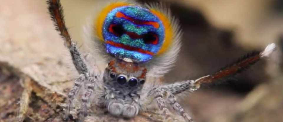 so-dancing-animals-spider