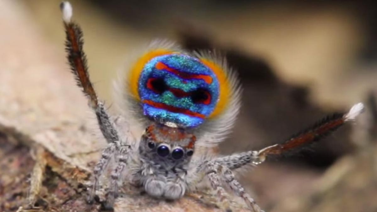 so-dancing-animals-spider