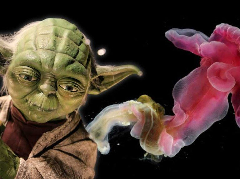 There's always a bigger fish: Animals named after Star Wars creatures and characters