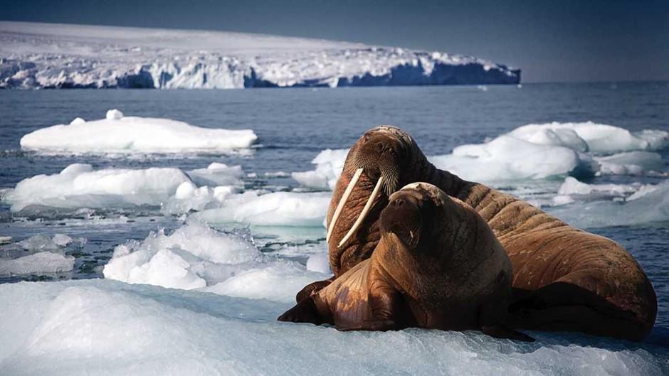 Sir David Attenborough returns for The Blue Planet II © BBC