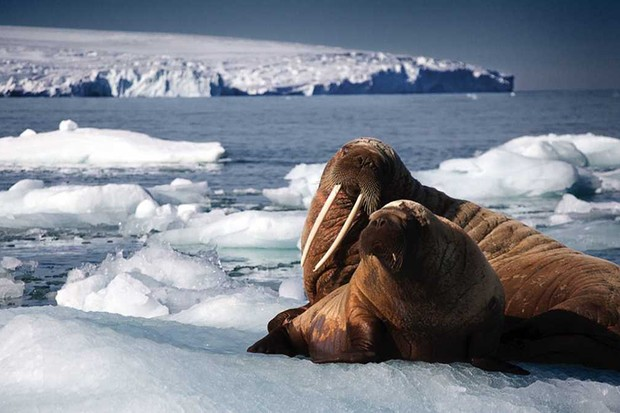 Sir David Attenborough returns for The Blue Planet II © BBC