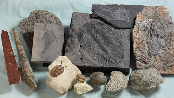 These are Ordovician-Silurian marine fossils from the museum of Tohoku University © Kunio Kaiho