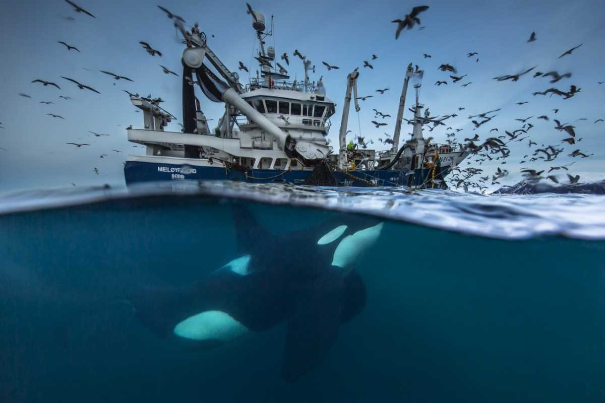© Audun Rikardsen/Wildlife Photographer of the Year