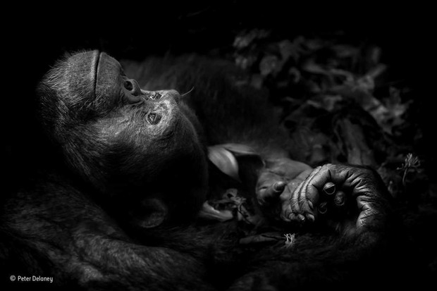 © Peter Delaney/Wildlife Photographer of the Year