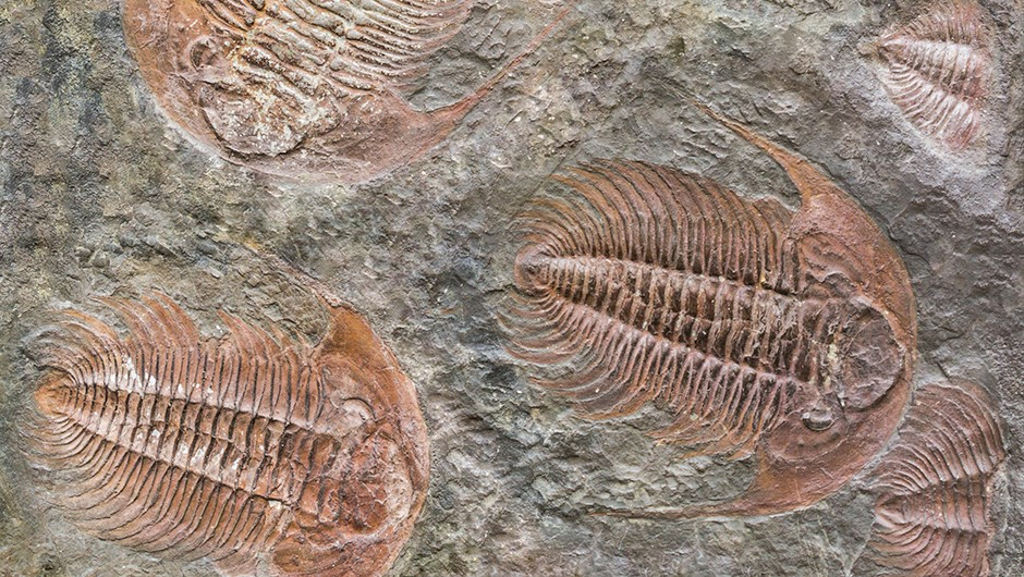 Was the course of evolution inevitable? © Getty Images