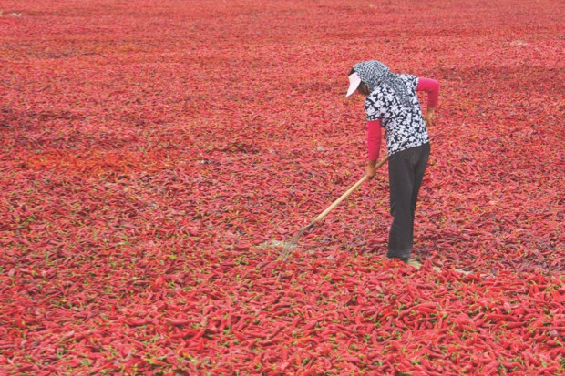 A woman drying out the chilli crop in China's Xinjiang province © Getty Images