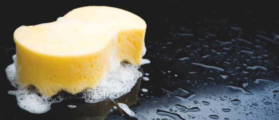 How is a sponge able to hold so much water? © Getty
