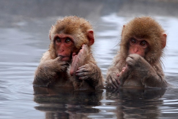 Were we once aquatic apes? © Getty Images
