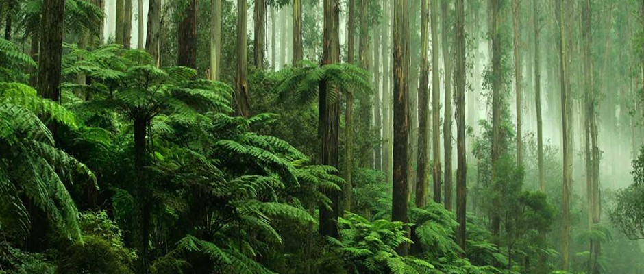 Protecting the tropical rainforests – an achievable global goal ...